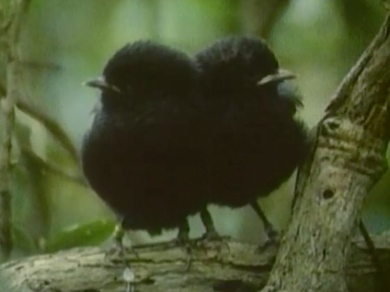education-resources,black-robin,science